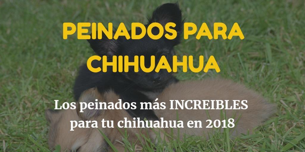 Peinados para chihuahua en 2018