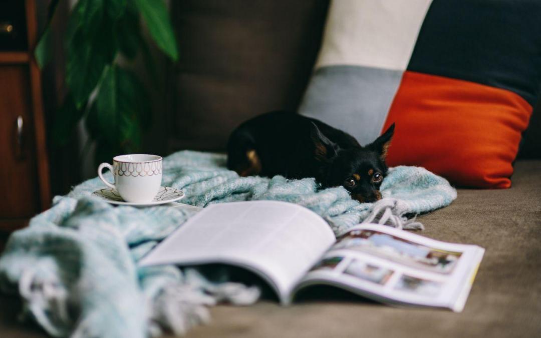 Cómo cuidar de un chihuahua taza de té