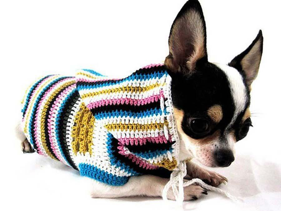 Aprende a hacer un suéter para chihuahuas