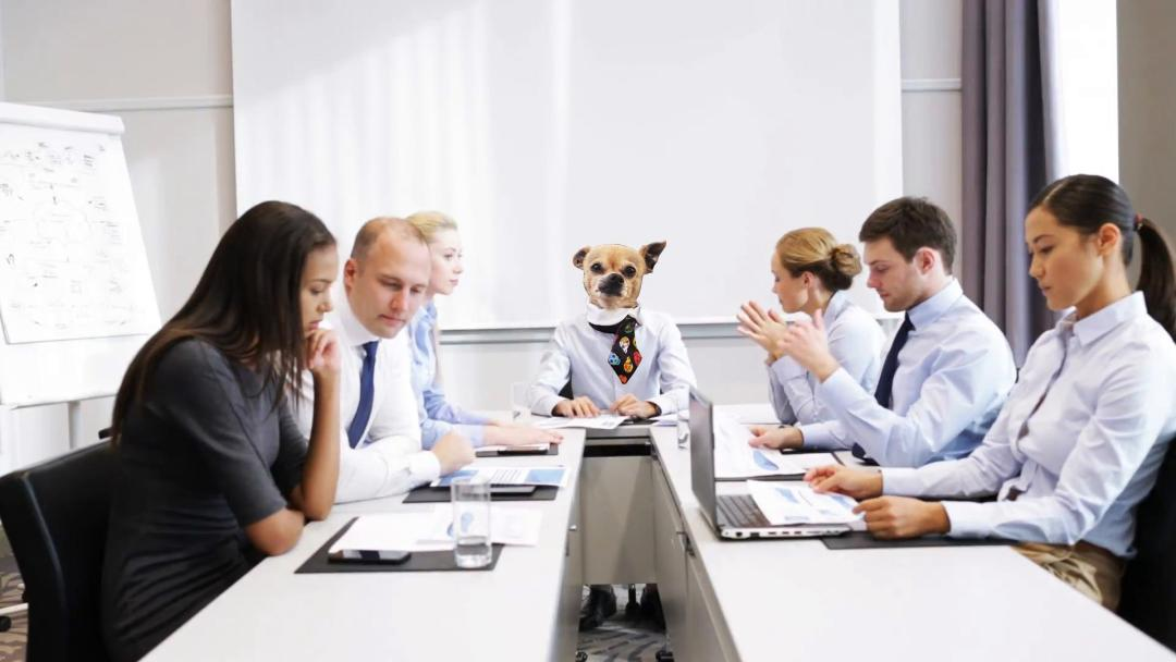 Photoshop imagen de chihuahua