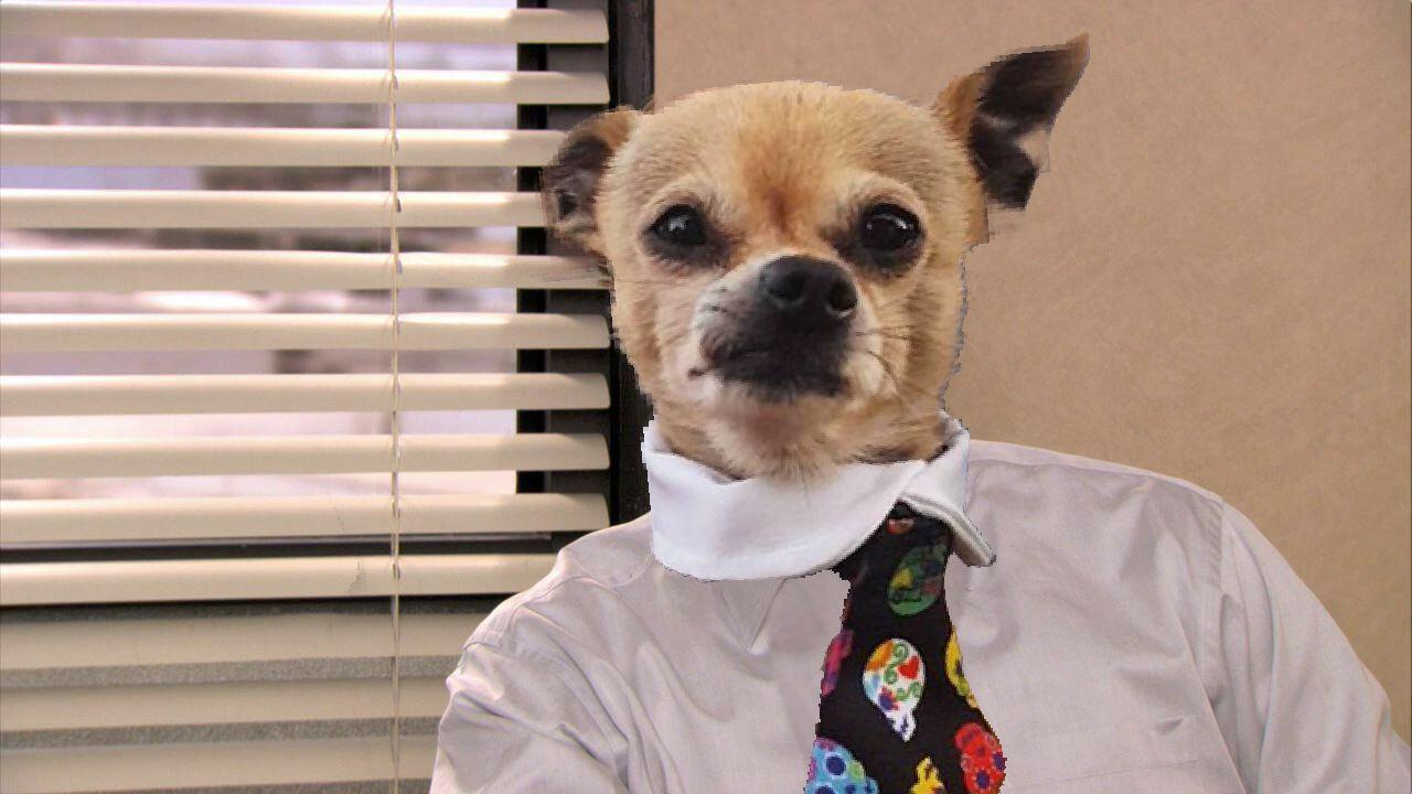chihuahua photoshop the office