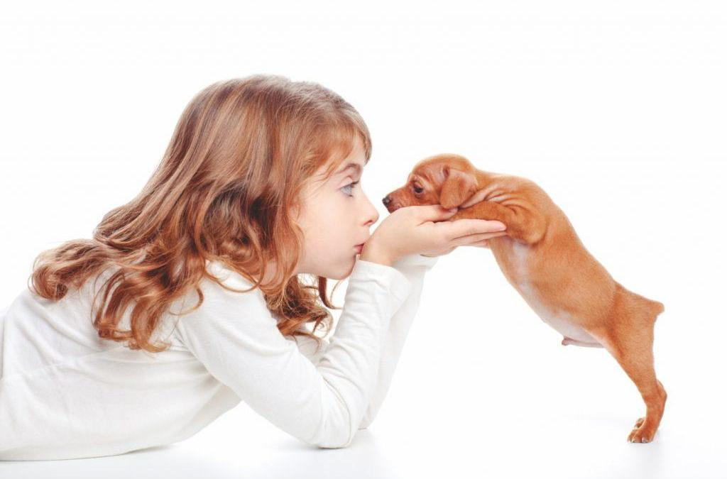 ¿Ser dueño de un chihuahua puede curar el asma?