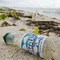 Ideonella sakaiensis – bacteria que recicla el plástico