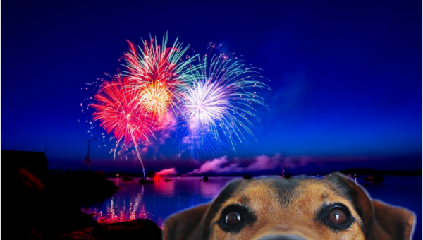 Keep Your Dog Safe During Fireworks