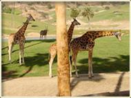 tp-safari