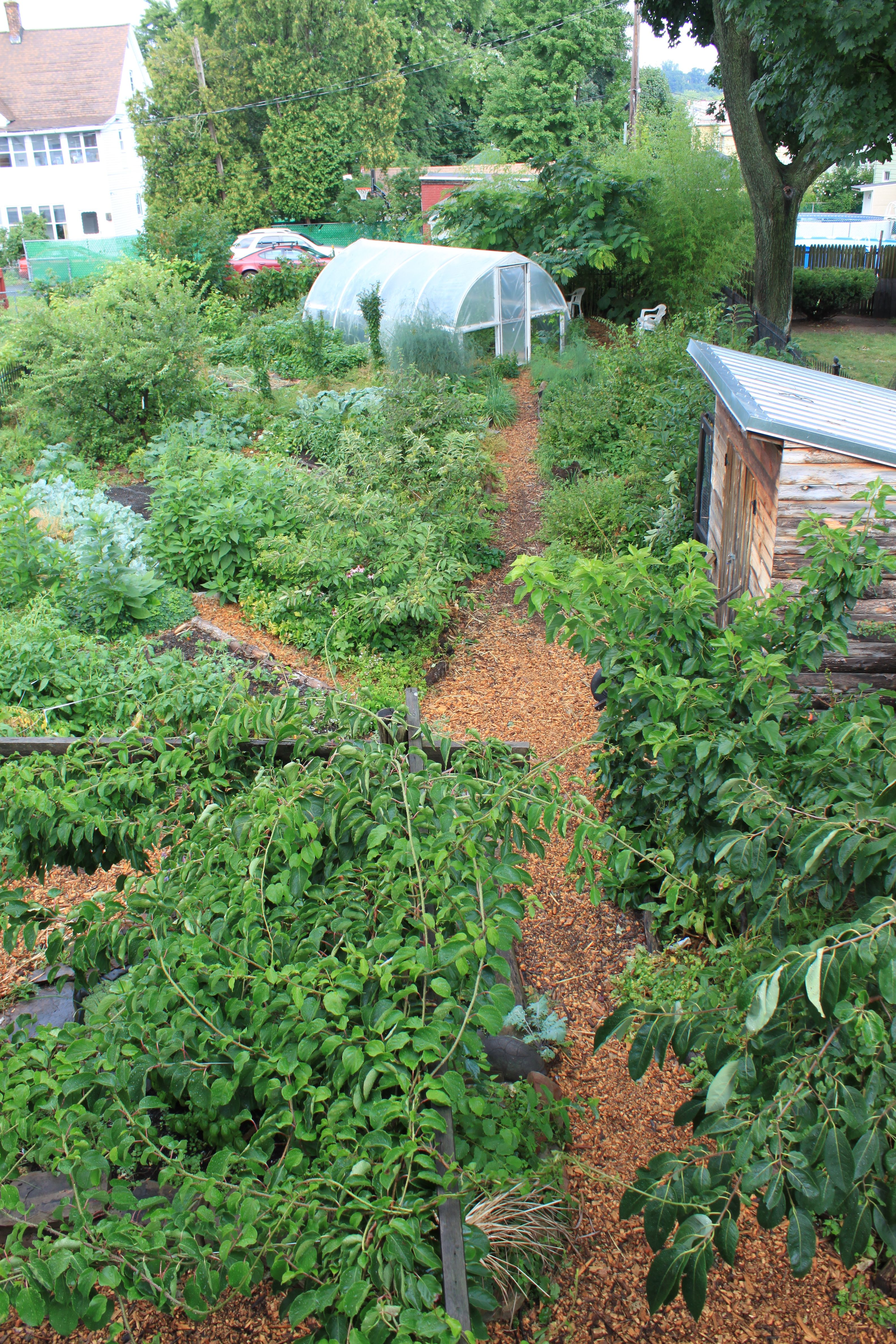 About | Paradise Lot on Backyard Permaculture Design id=64209