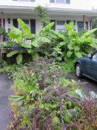 tropical garden 16