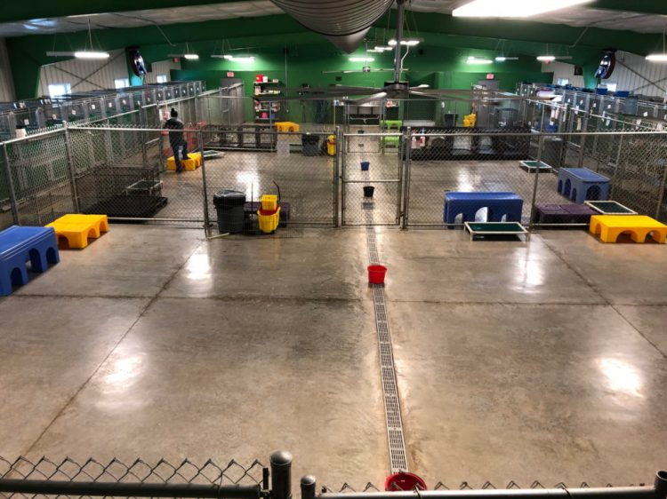 Dog daycare at Paradise Pet in Bloomington Illinois
