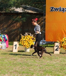 Euphoria Best Minor Puppy Centraleuropean Boxer show 5