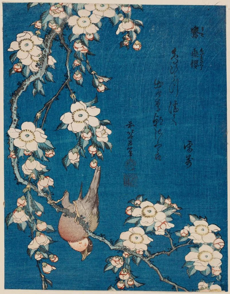 hokusai_Bullfinch and Weeping Cherry