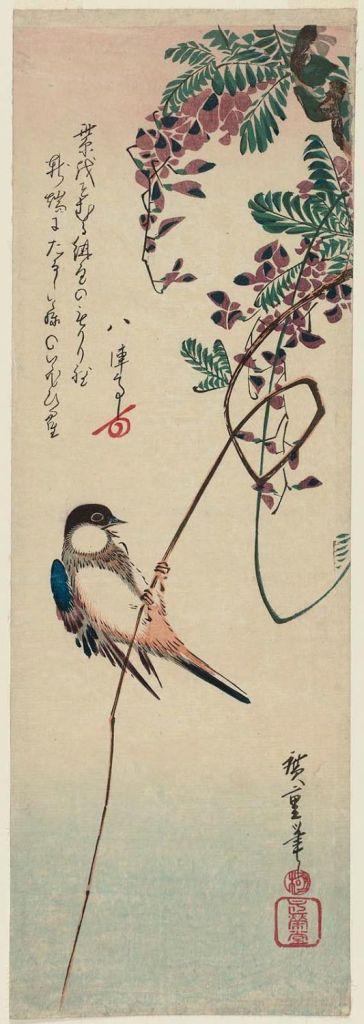 歌川広重 Utagawa Hiroshige_藤に四十雀  White-cheeked Bird and Wisteria