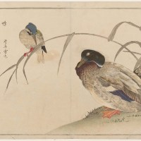 百千鳥狂歌合 「鴨 翡翠」