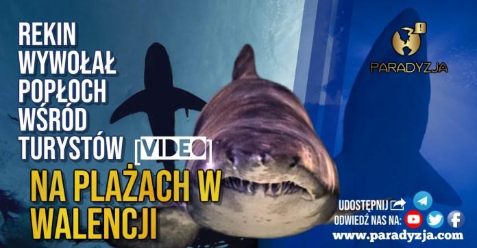 Rekin wywołał popłoch wśród turystów na plażach w Walencji [VIDEO]