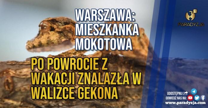 Warszawa: Mieszkanka Mokotowa po powrocie z wakacji znalazła w walizce gekona