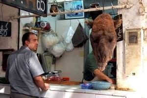 maroko-glowa-wielblada [MINIATURY]