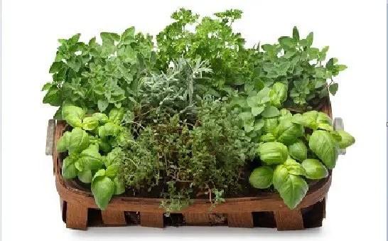 mix-de-plantas-e-ervas