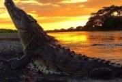 La verdad sobre los cocodrilos en PV