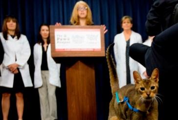 Nueva York prohíben extirpar las garras de los gatos