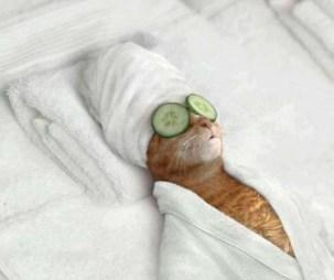 2.) Uff.. Esta vida de gato...