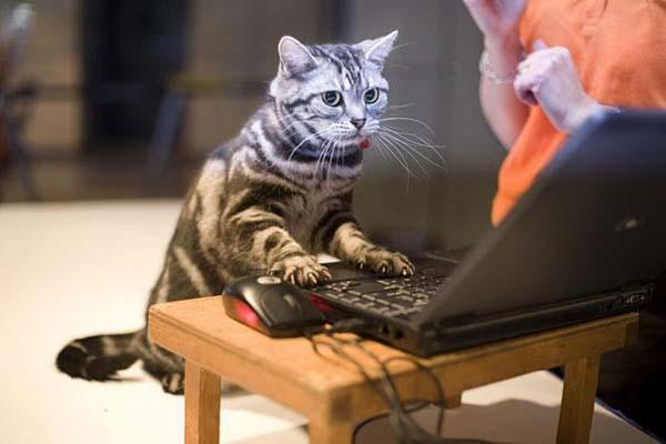 13.) Ese anuncio de descuentos en ratones...