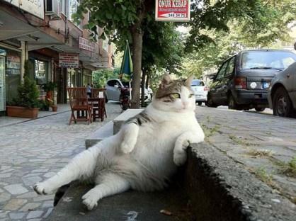17.) Los gatos si que disfrutan la buena vida...