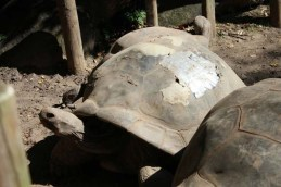 13.) Para ayudar a una tortuga a curarse...