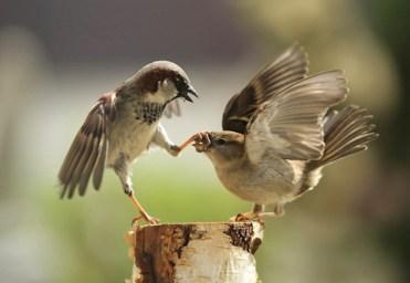 """Hasta los animales tienen sus problemas matrimoniales, una excelente representación para la frase """"cierra el pico"""""""