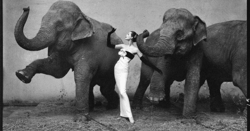 Dovima_with_Elephants1