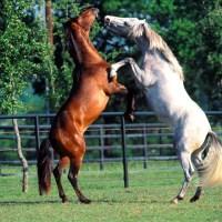 Algumas curiosidades sobre cavalos...