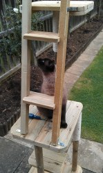 """""""That screw up there needs tightening before I'll climb the ladder!"""""""
