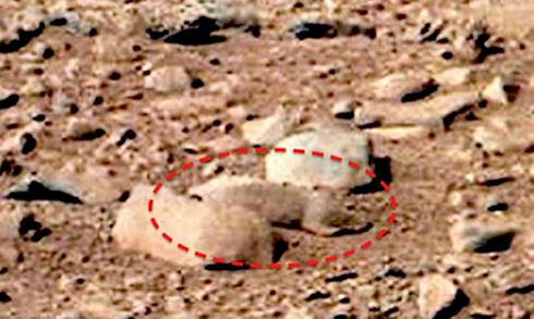 squirrel spotted on mars
