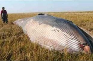 Une baleine enlevée par une Ovni?