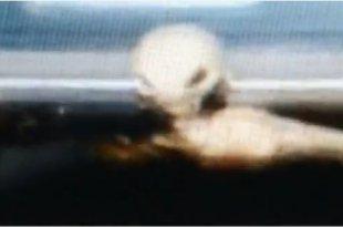 Un alien sous une voiture