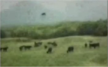 Une vache enlevée par des extra-terrestres?