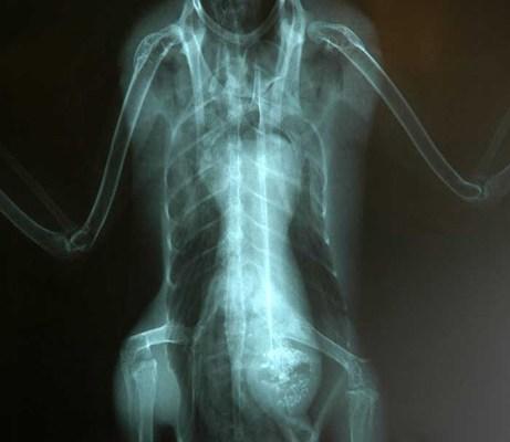 Un extraterrestre dans le corps d'un canard?