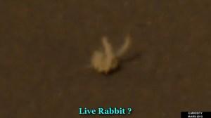 Curiosity: Un lapin sur Mars !?!