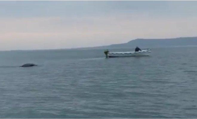 Un monstre marin dans un lac en Irlande du Nord