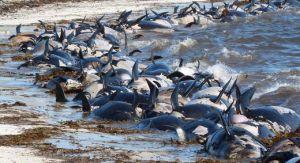 L'inquiétant recensement des hécatombes animales dans le monde de 2008 à 2014 en vidéo