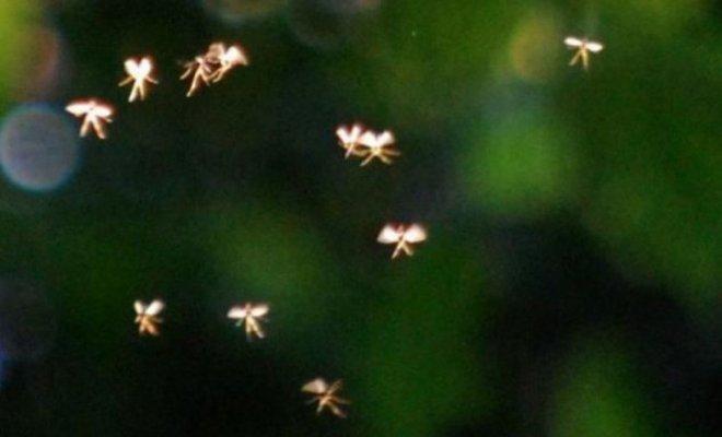 Un professeur d'université dit avoir photographié des fées