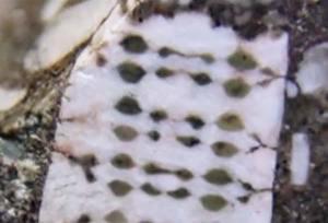 Une puce électronique extraterrestre de 450 millions d'années découverte en Russie!