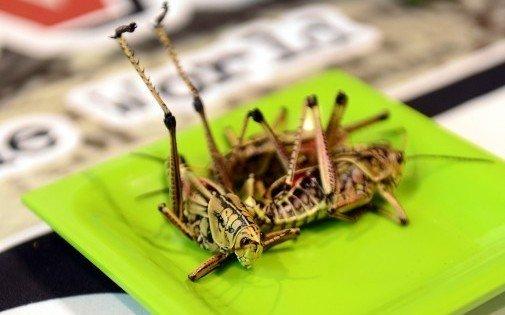Des étudiants créent de l'électricité gratuite et inépuisable grâce à des insectes