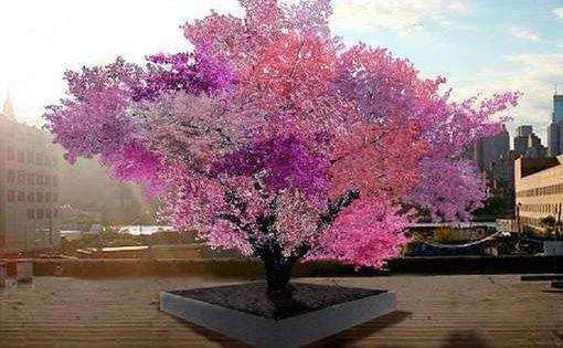 "Insolite: L'arbre ""magique"" capable de produire 40 fruits"