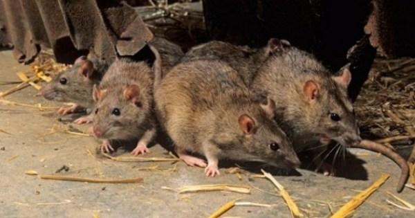 Une épidémie de peste fait 40 morts à Madagascar