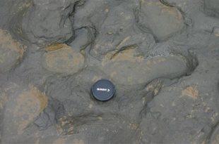 Découverte de traces de pas vieilles de 800 000 ans
