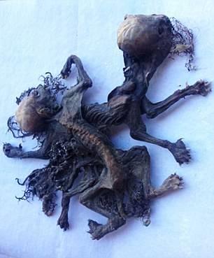 La découverte de ce fermier prouverait-elle l'existence réelle d'une créature mythique?