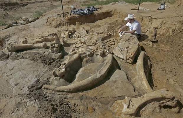 Une famille américaine découvre le squelette entier d'un mammouth