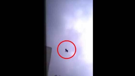 Un cheval noir vole en Arabie Saoudite ? Un signe de la fin des temps ?