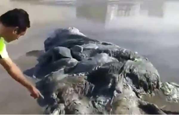 Une mystérieuse créature échouée sur une plage d'Acapulco intrigue les scientifiques