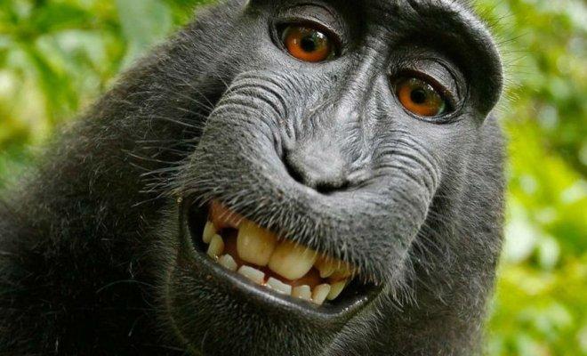 Il y a 21 millions d'années, des singes auraient voyagé sur des radeaux