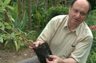Di Giorno: l'homme qui faisait pousser les plantes… sans eau !